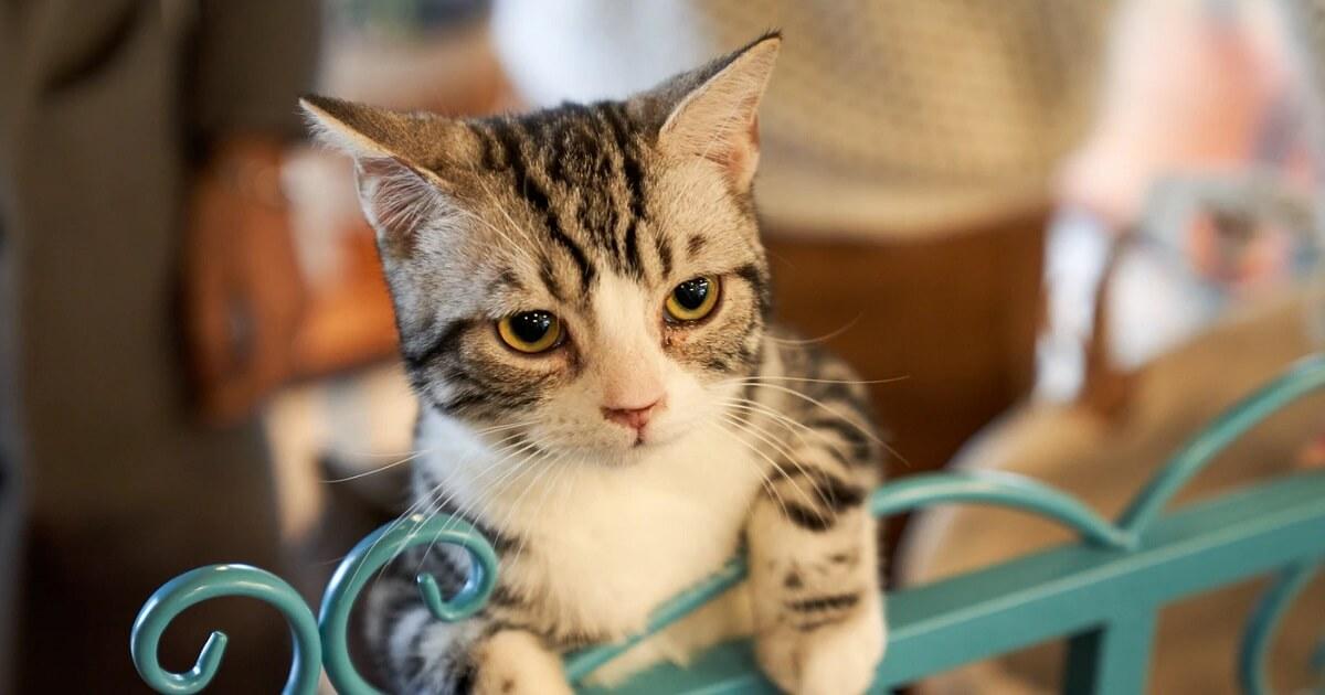 子猫への離乳食の食べさせ方