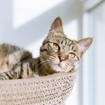 猫のペットロスの原因と解消方法を解説~悲しみを乗り越えるために~