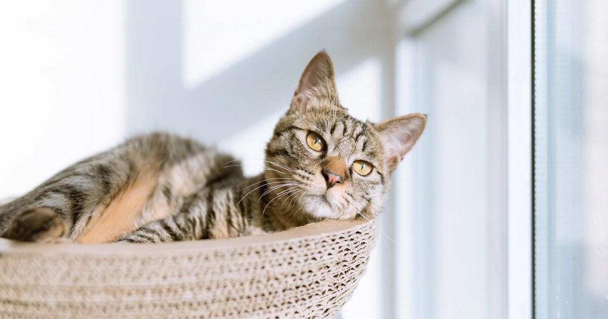 猫は紫外線を見ることができる?