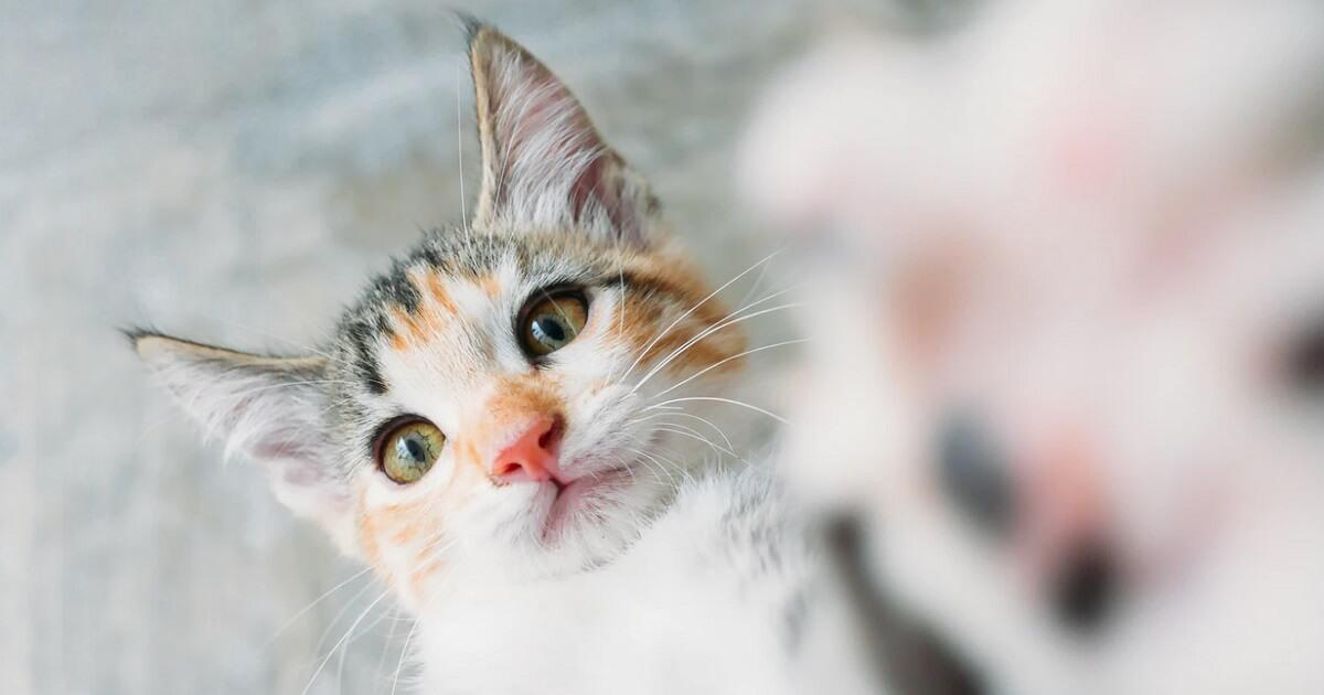 子猫の爪とぎする場所を限定する