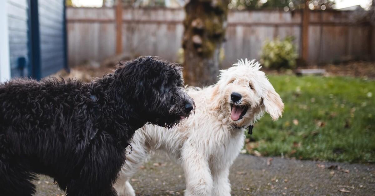 犬を多頭飼いする時のトイレの数は1つでOK?分けるべき?