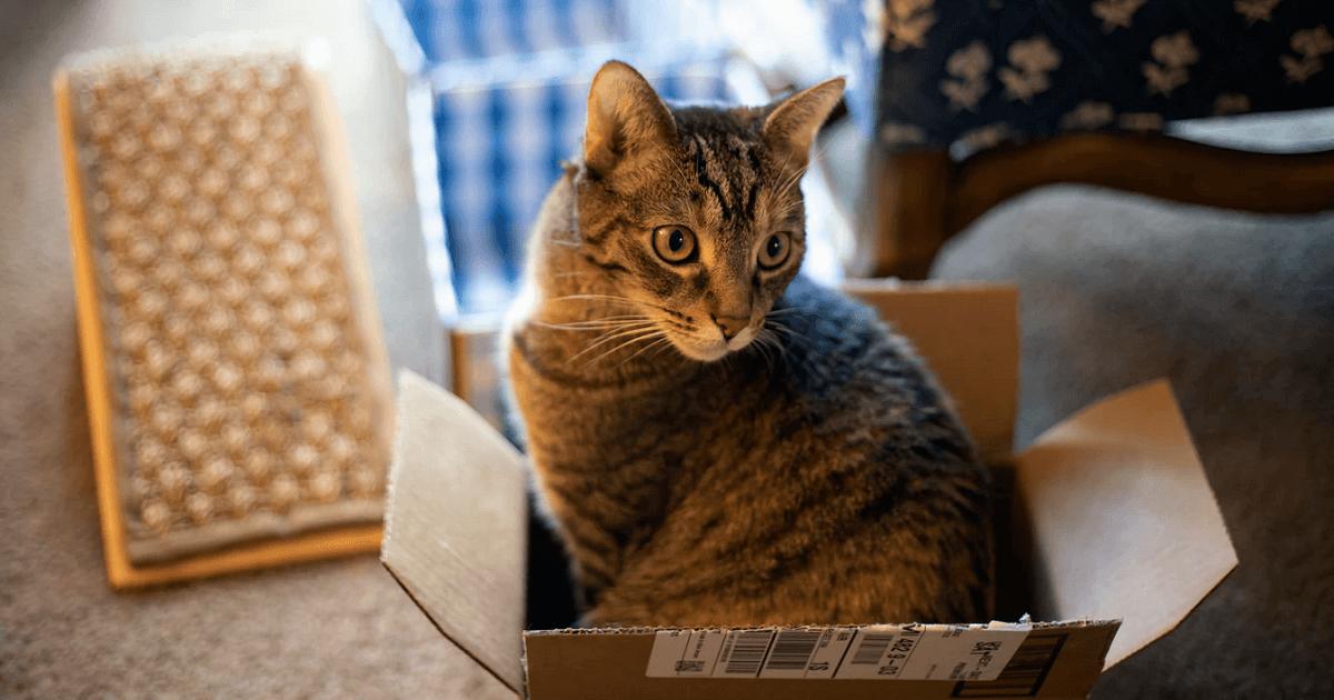 猫がダンボールを食べる3つの理由