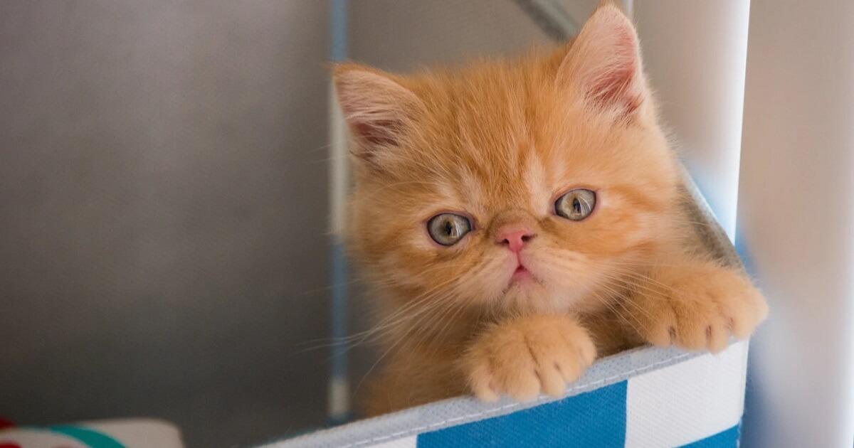 子猫をハウスに入れるしつけは必要?