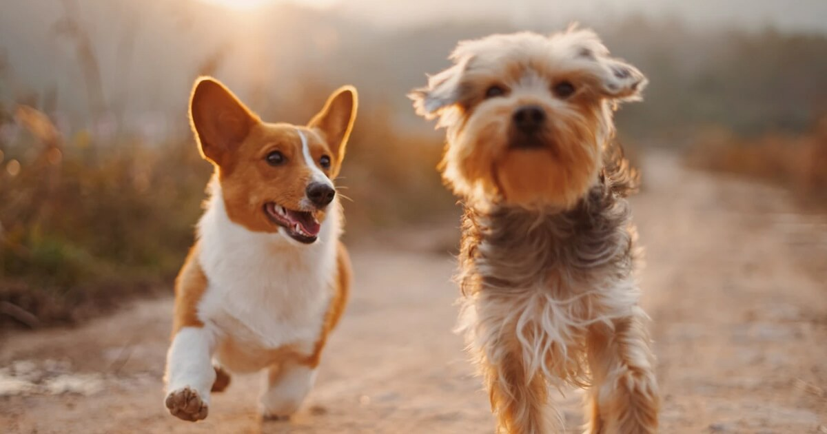 成犬と遊ぶ時間は何時間くらいが理想?