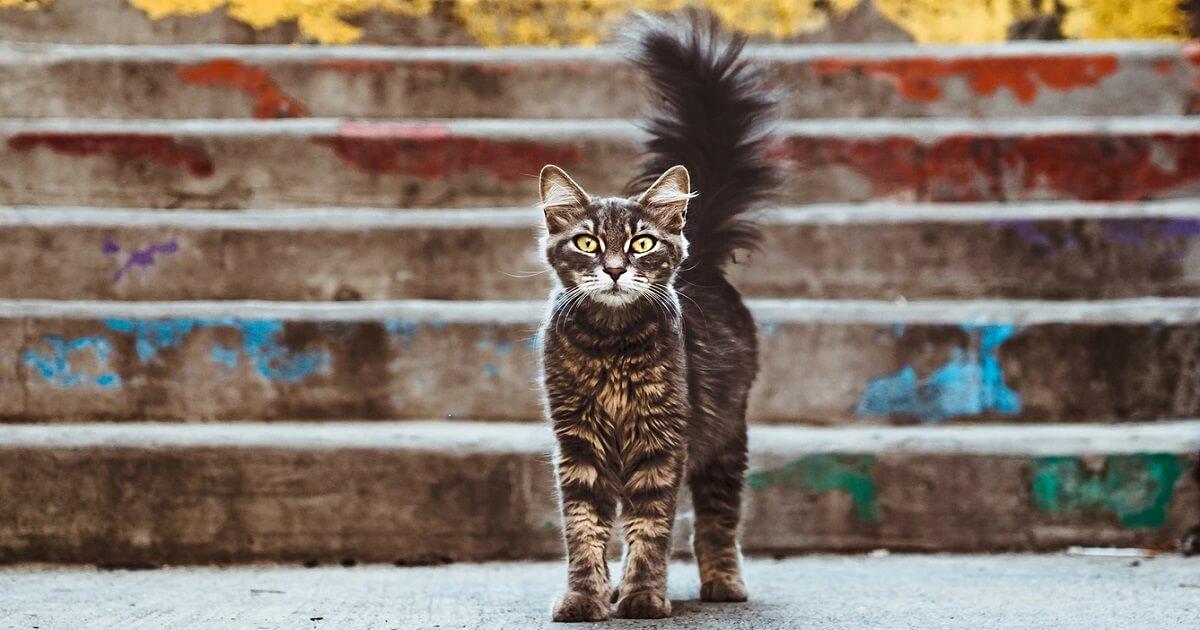 猫が死ぬ2つの大きな原因