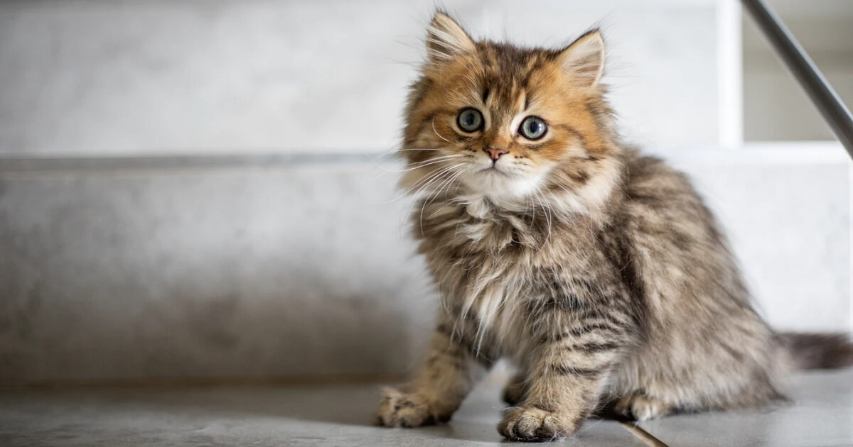 猫の去勢手術を失敗させないための注意点