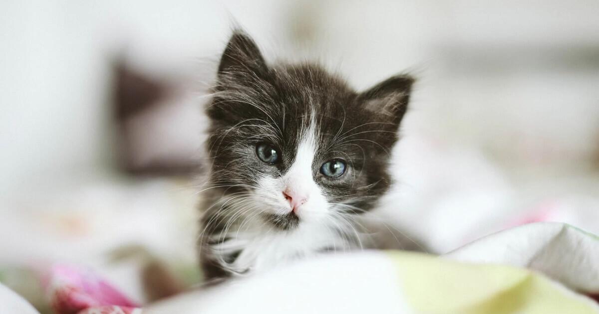 猫の鼻が赤くなることについてのまとめ