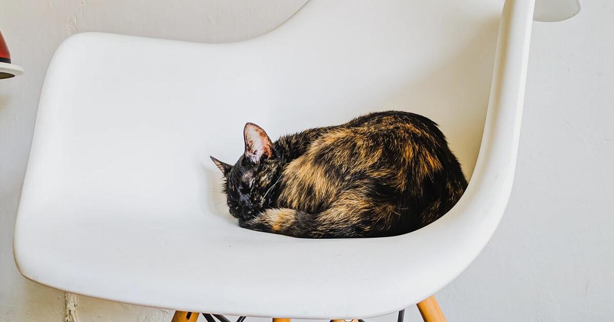 猫が死ぬ間近の看取り方