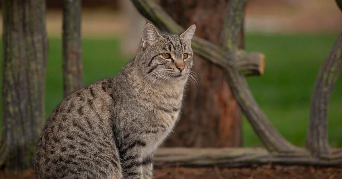猫は叱っても記憶に残せない