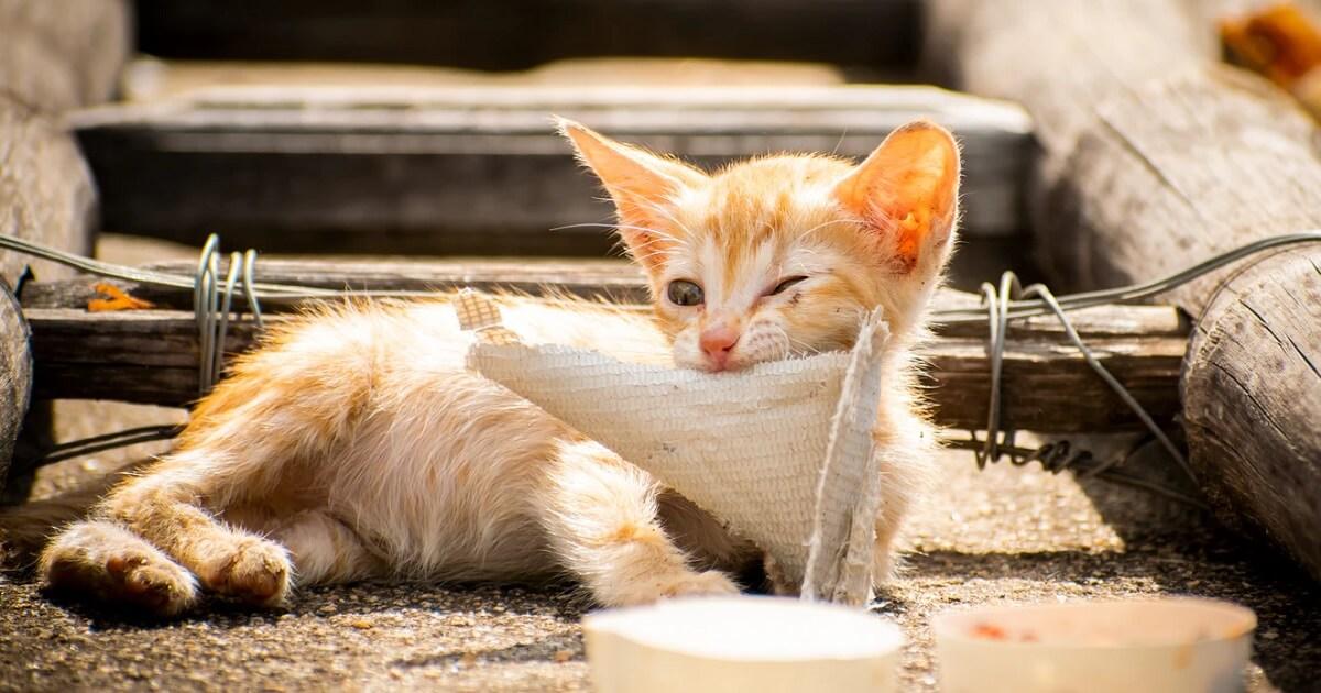 子猫の離乳食の手作りは難しい