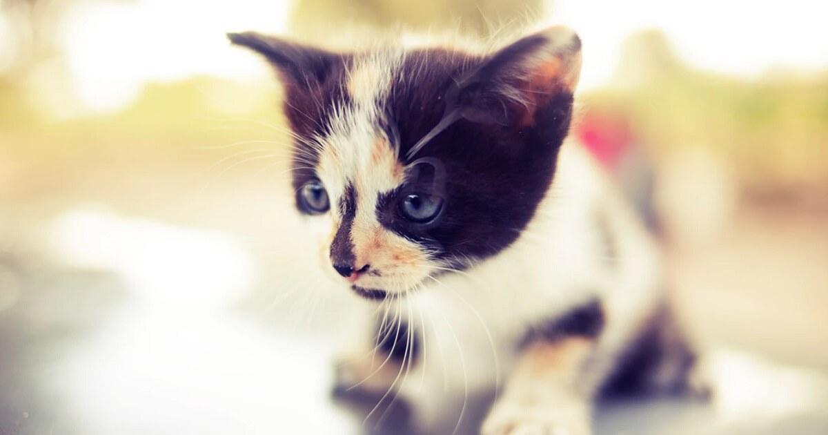 猫に去勢手術をするデメリット