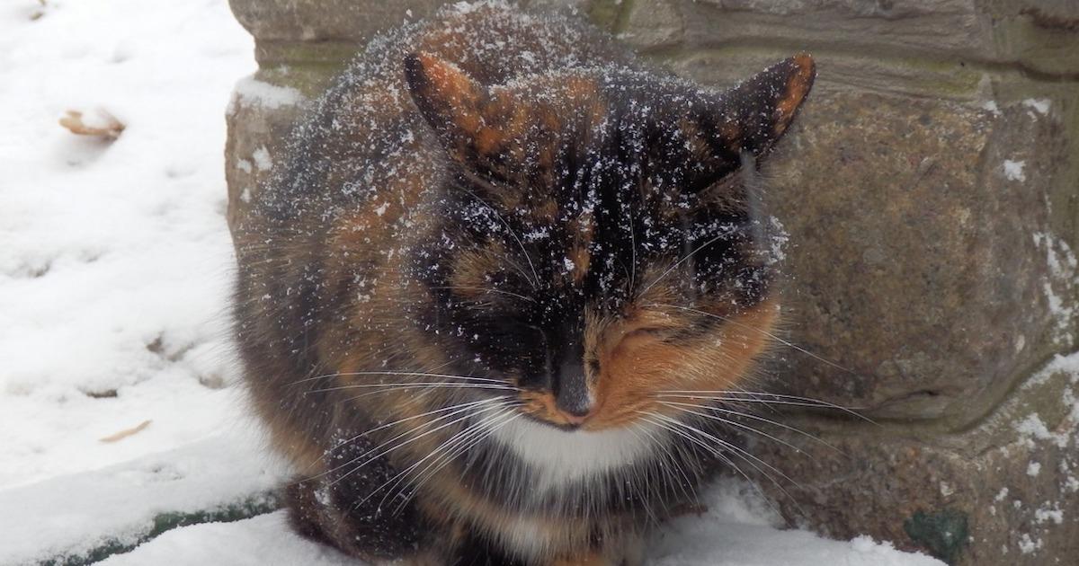 真冬の野良猫の寝床はどこ?