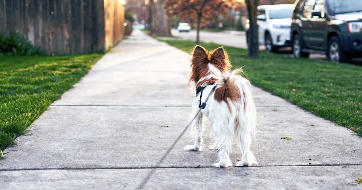 犬の散歩は「運動」ではない