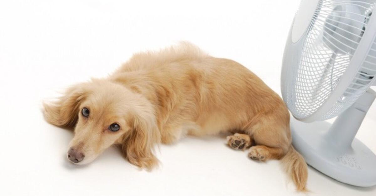 犬の夏バテ症状