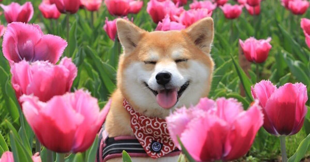 幸せを運ぶ犬