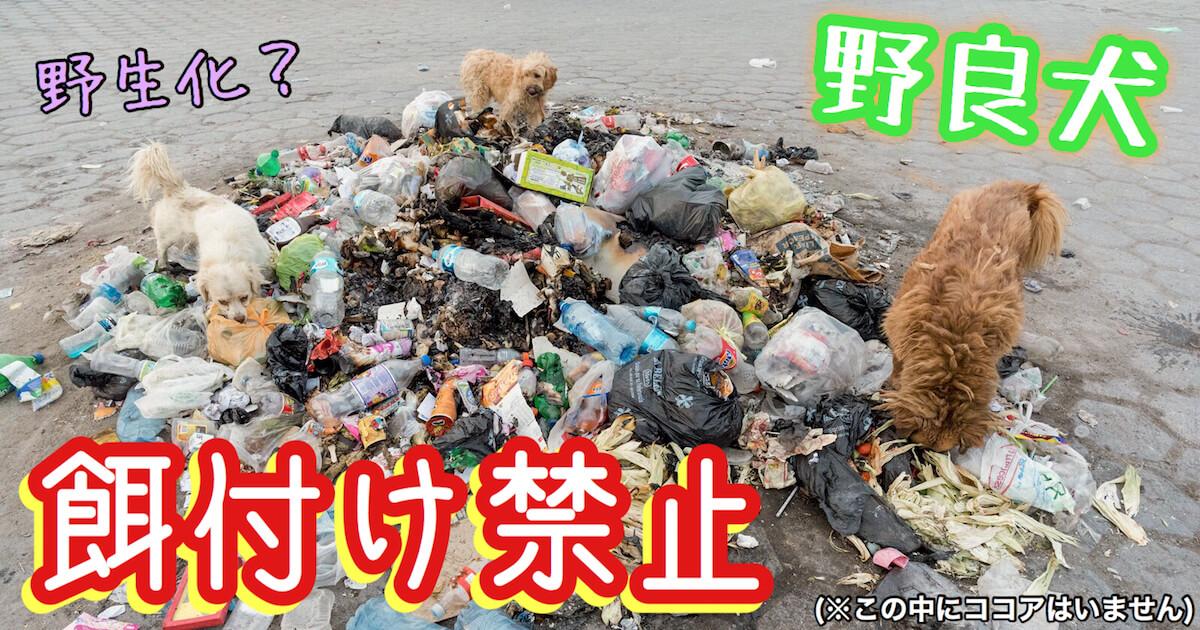 野良犬への餌付け禁止