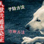 犬から人にうつる病気!人獣共通感染症