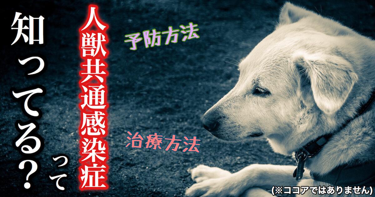 犬の人獣共通感染症