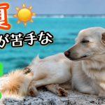 危険なサマーカット!夏の暑さが苦手な犬への対策