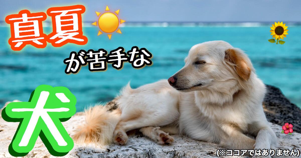 真夏が苦手な犬