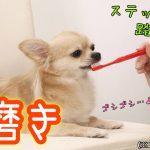 犬の歯磨きの頻度は2日に1回?犬はガムで歯磨き完了?