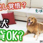 ペット不可の賃貸で捨て犬保護を交渉することは可能?