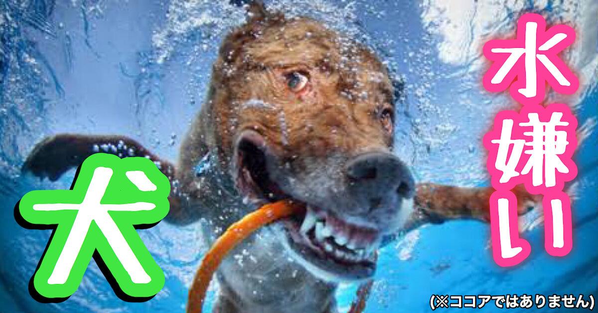 水嫌いな犬
