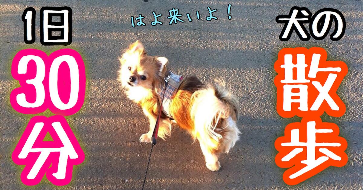 犬の散歩は1日30分