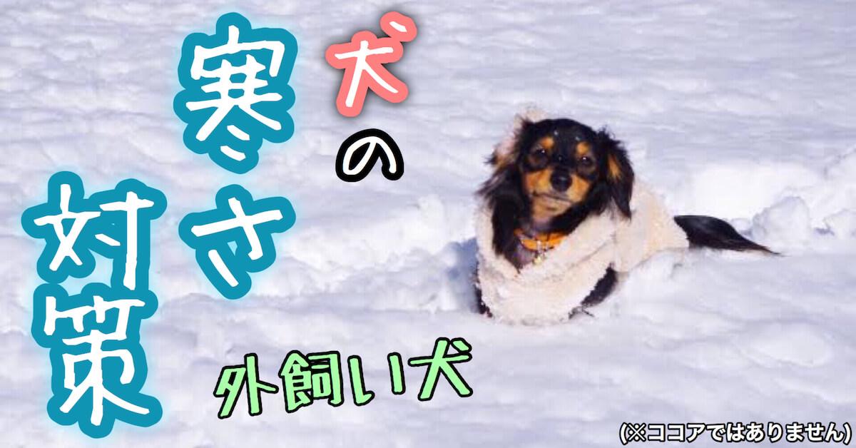 犬の冬の寒さ対策