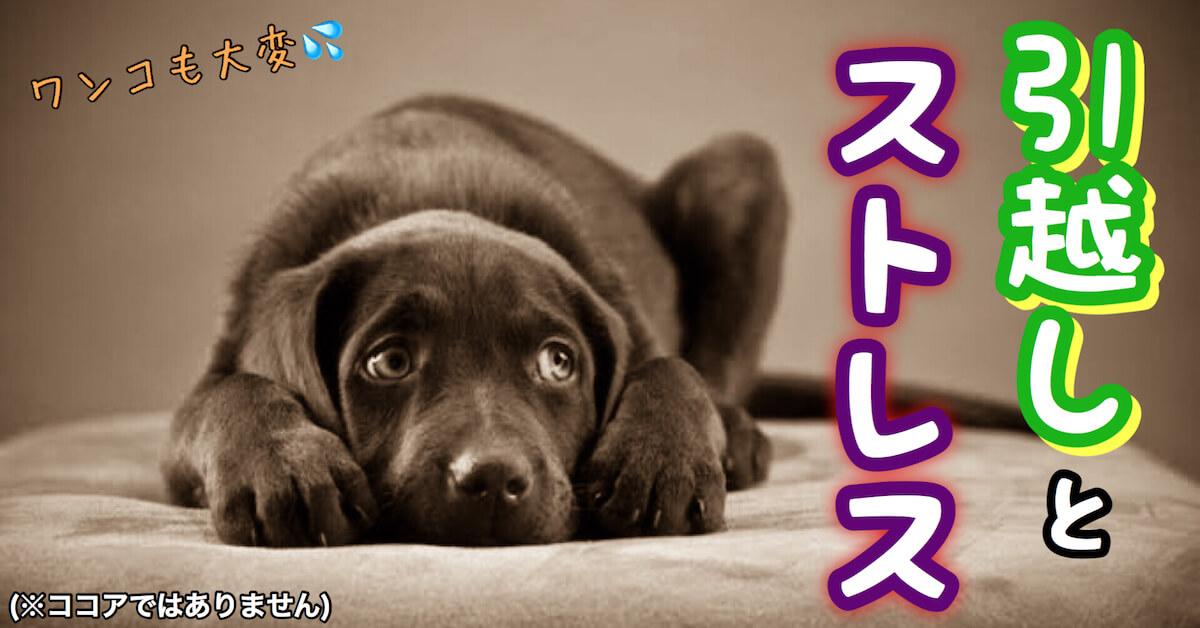犬は引越しでストレスMAX