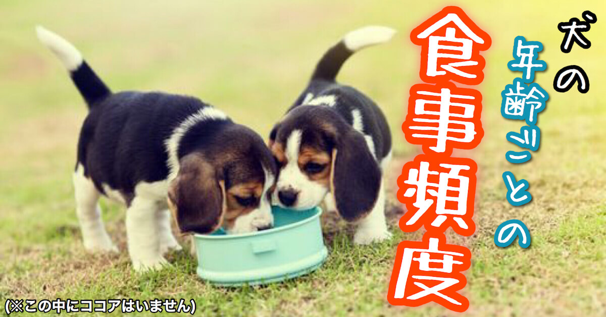 犬の年齢ごとの食事頻度