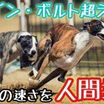 ウサイン・ボルト超え?犬が走る速度を人間換算すると?