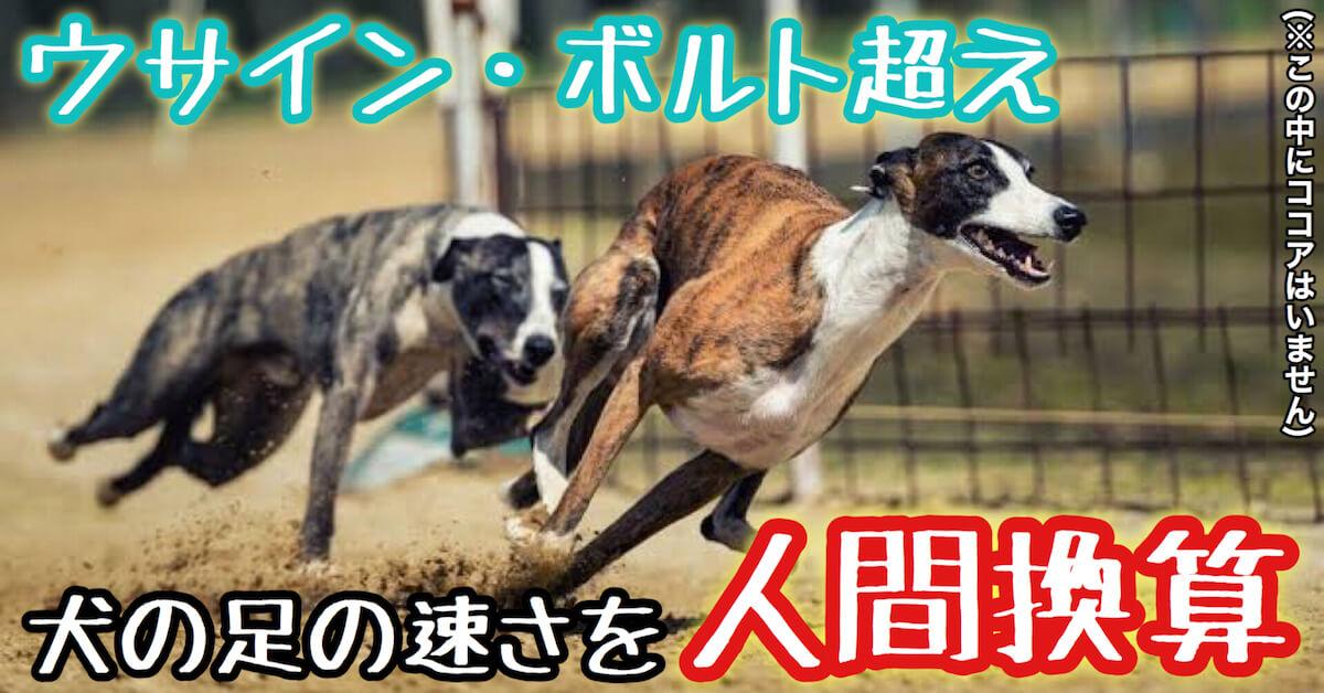 犬の足の速さを人間換算するとウサイン・ボルト超え