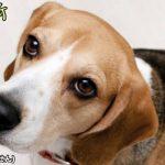 犬の目やにで注意する2つのポイント