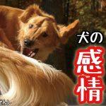 犬の感情を表す尻尾の振り方〜3パターン〜