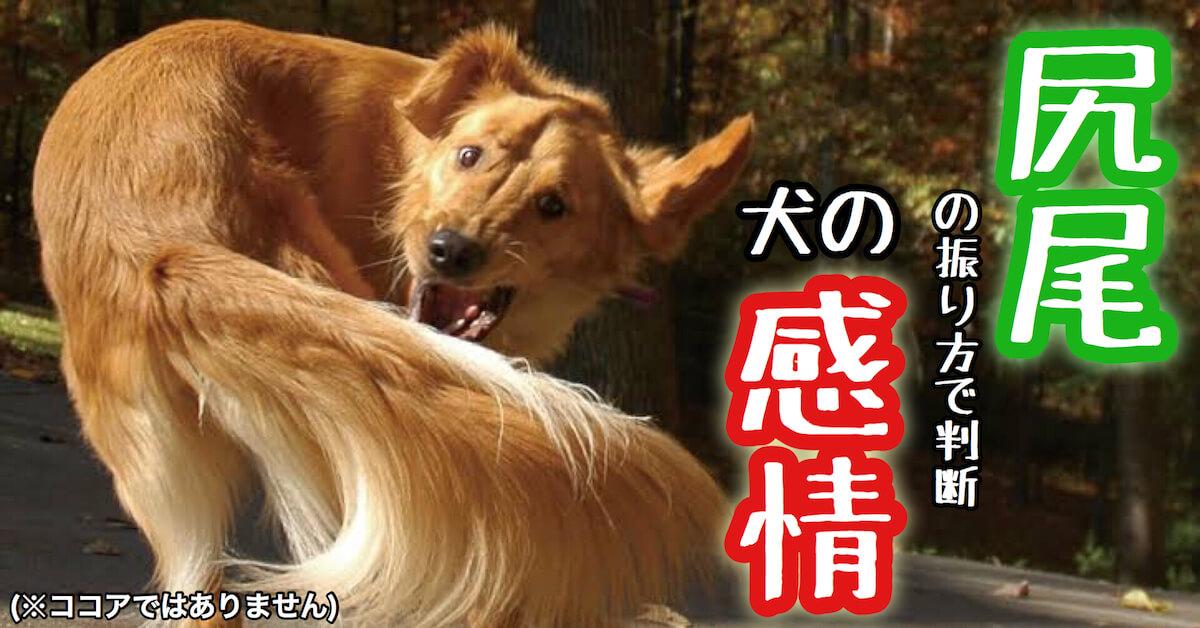 尻尾の振り方で判断する犬の感情