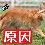 犬のしっぽがだらんと下がる2つの原因