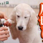 犬の爪切りで使う3タイプの爪切り