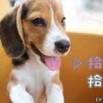 拾った犬を飼えない場合の3つの対処方法