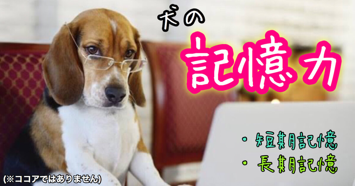 犬の記憶力