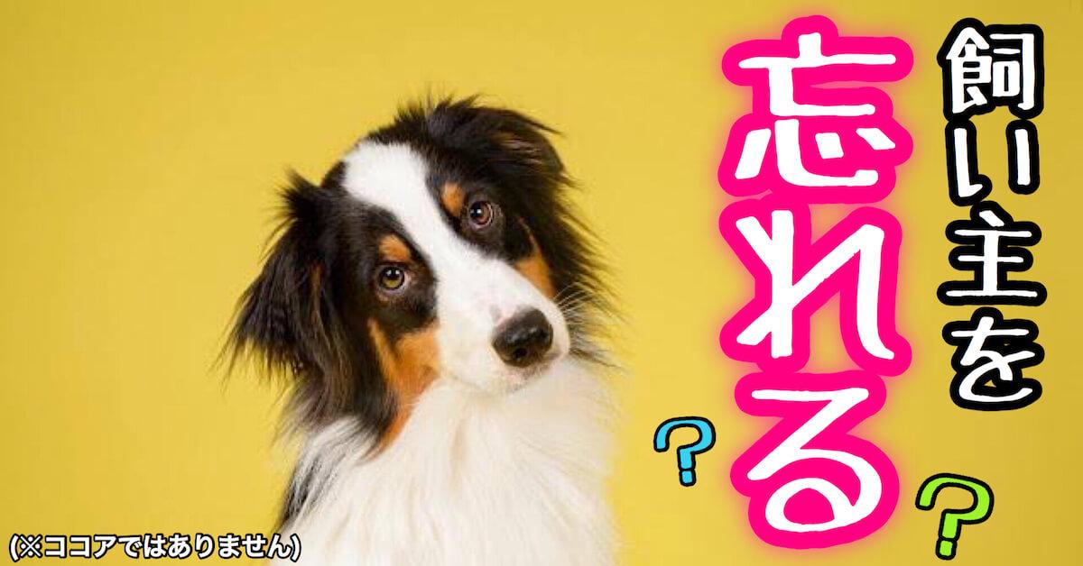 飼い主を忘れる犬
