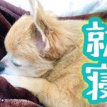 犬が疲れて寝るときの3つのサイン