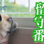 犬が留守番の時に鳴かないようにする4つの方法