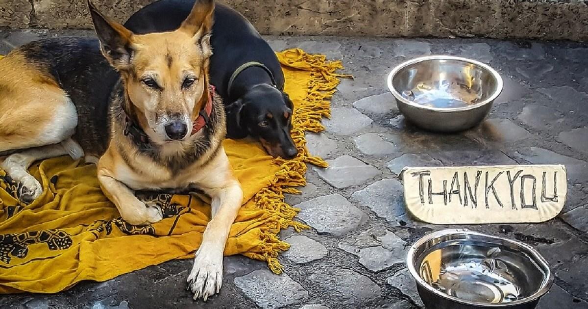 野良犬を餌付けすることのリスクを知る