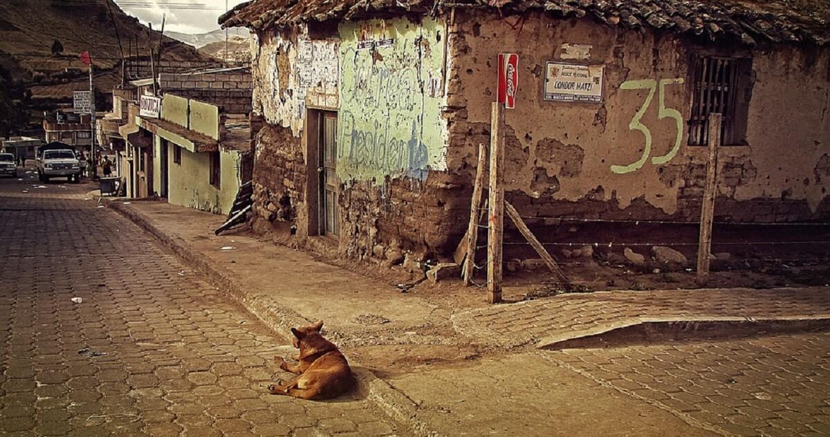 野良犬の避難が必要なときは避難所のペット受け入れが可能か確認を