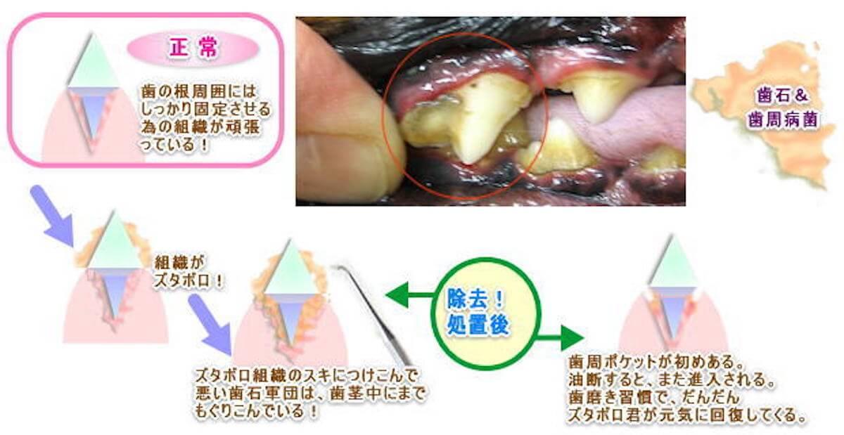犬の歯周病の原因