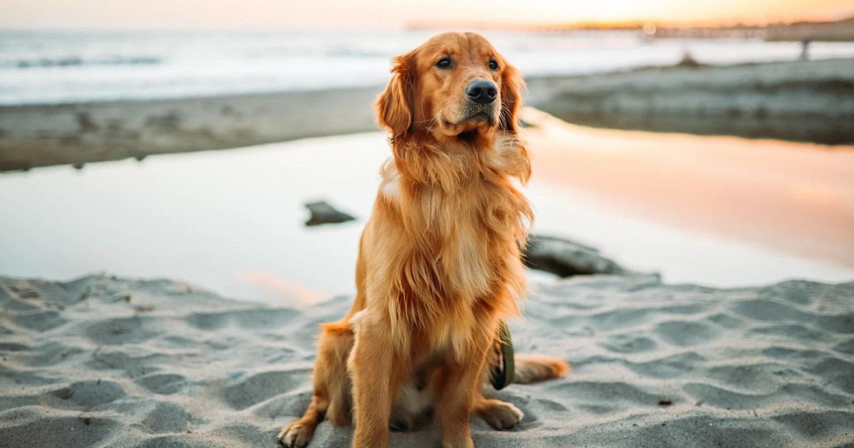 犬が遠吠えする4つの理由とは?