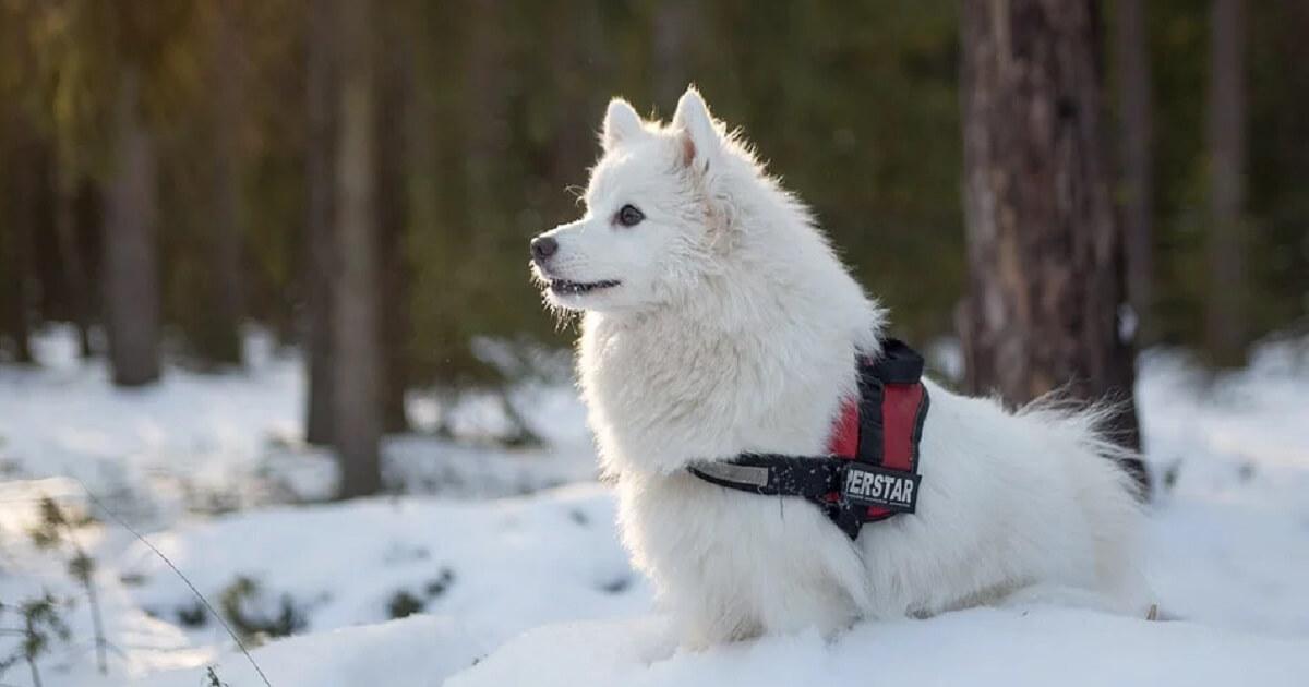 冬の外飼い犬は雨風凌げれば良いというわけでは無い