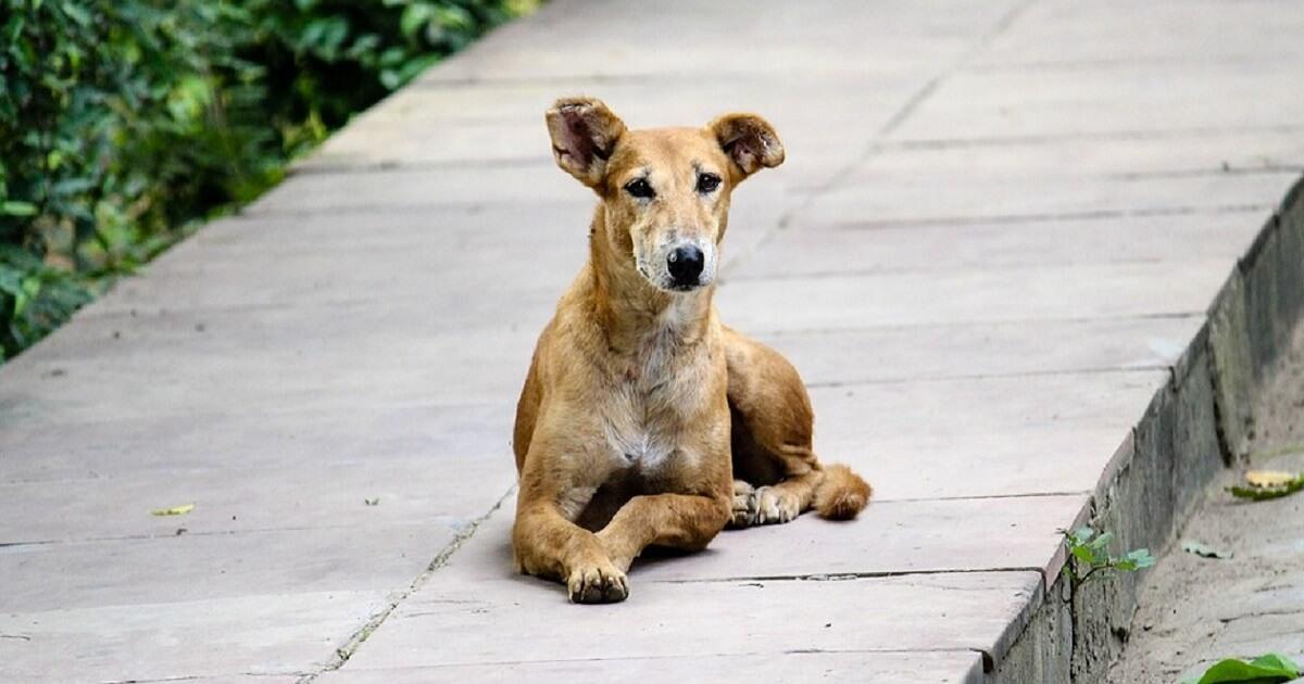 野良犬とは野生化した犬