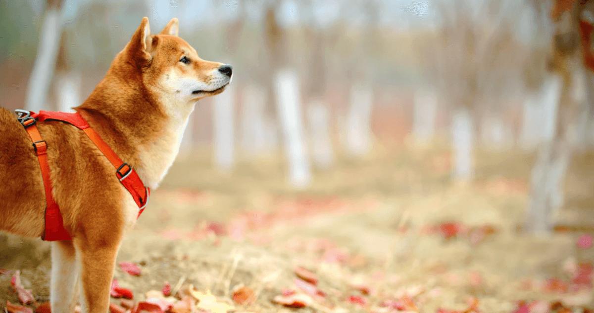 犬の腸を整えるサプリメントランキング